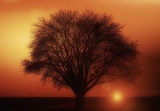 『おおきな木』あらすじ
