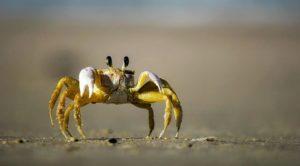 『猿蟹合戦』登場人物
